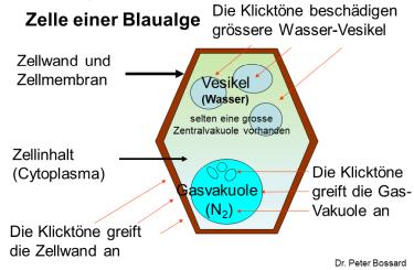 blaualge-einwirkung-375
