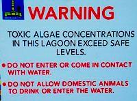 Bluealgae warning / Michael Zimmer / Flickr.com