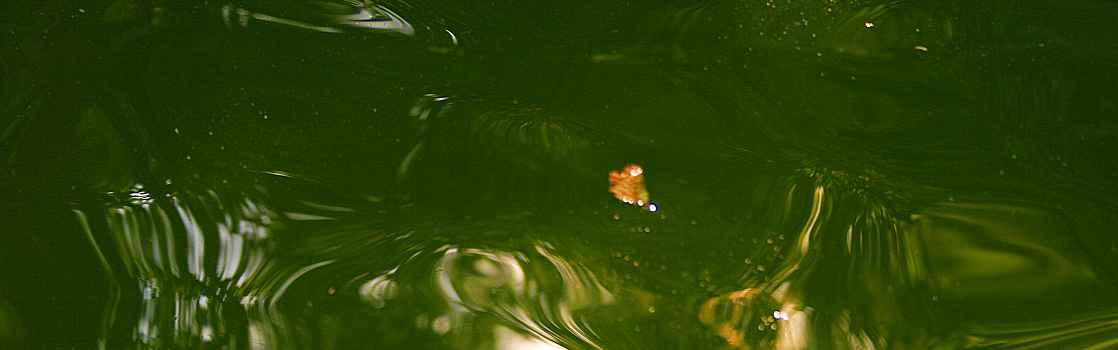 truebes-teichwasser