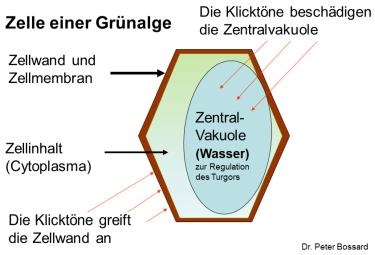 gruenalge-einwirkung-375