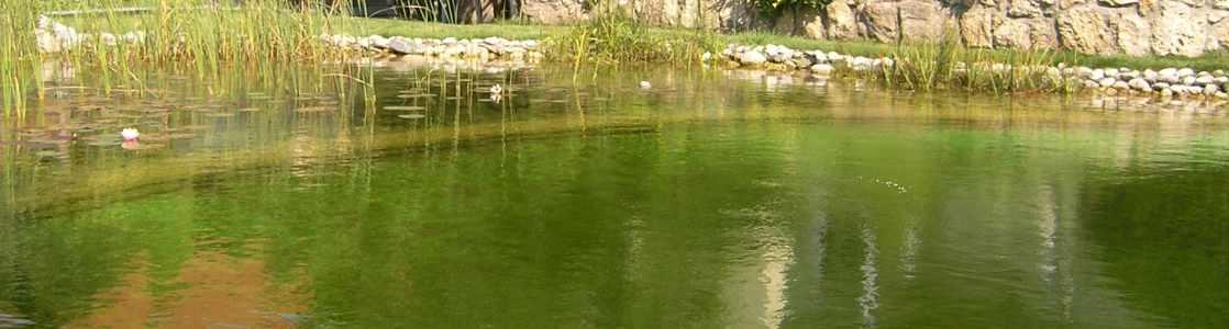 Schwimmteich ohne Algen