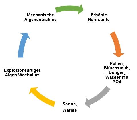 teufelskreis-naehrstoffe-algen